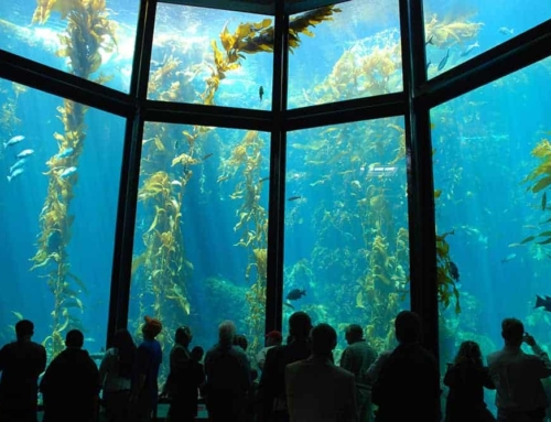 Monterey Aquarium and Scuba Weekend Aug. 8-11, 2019